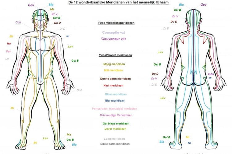 Meridianen menselijk lichaam